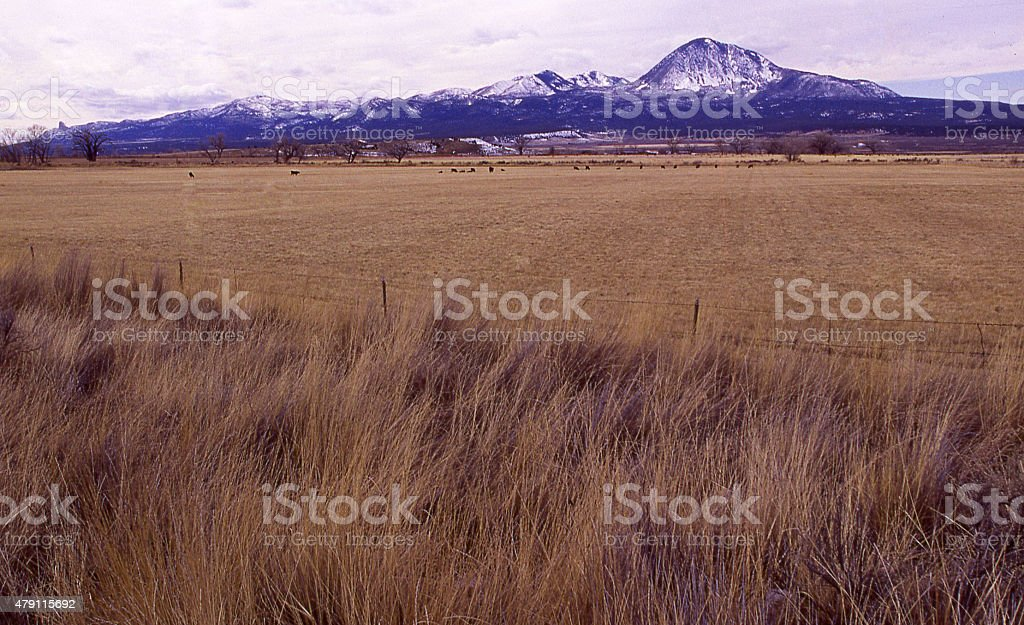 Ute Mountain snow and winter cattle pastures near Cortez Colorado stock photo