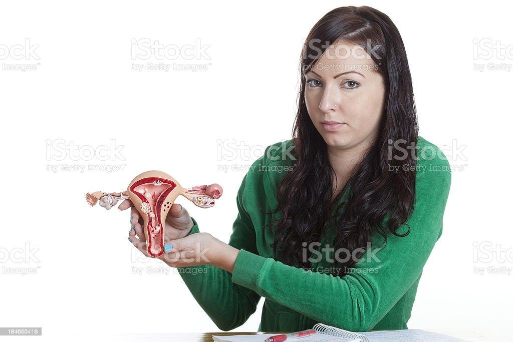 Uterus royalty-free stock photo