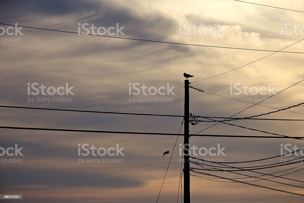 Utility Pole at Sunset royalty-free stock photo