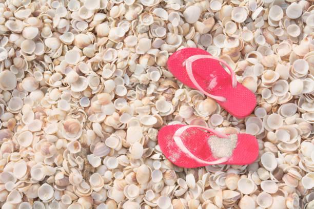 vakantie concept, schelpen tropisch strand achtergrond met gespiegeld flops - pink and orange seashell background stockfoto's en -beelden