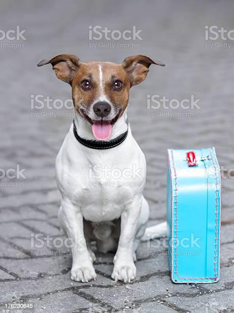 Vacation dog picture id176230645?b=1&k=6&m=176230645&s=612x612&h=mlxu7ngqf1vbbgfjmzxujjb5pnzsyu85vdcglfoazfk=