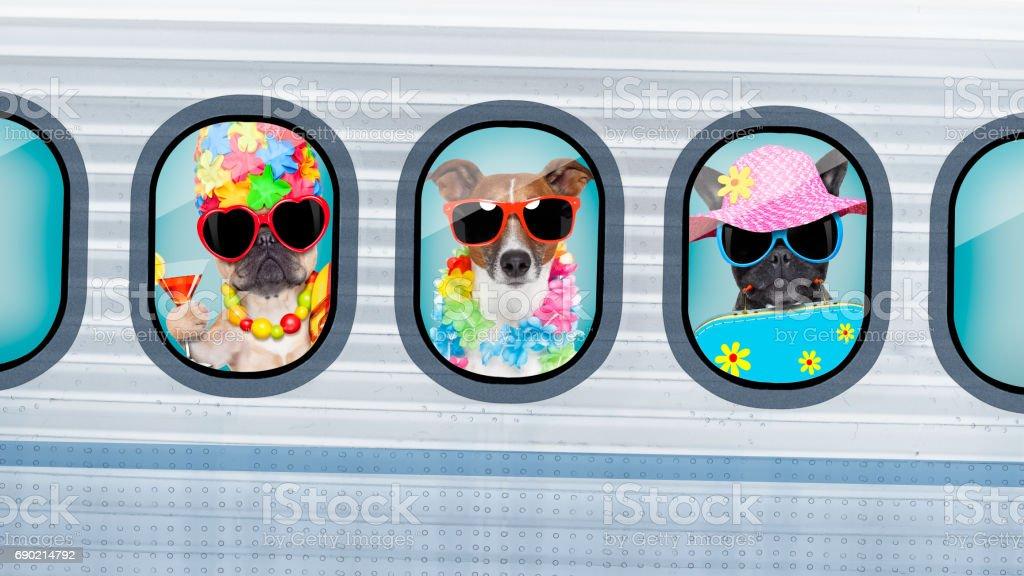 chiens de vacances en avion - Photo