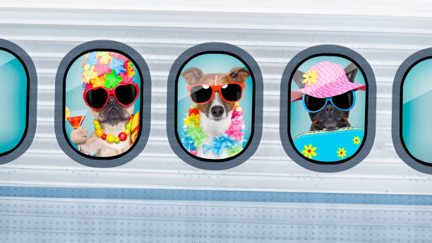 chiens de vacances en avion - valise humour photos et images de collection