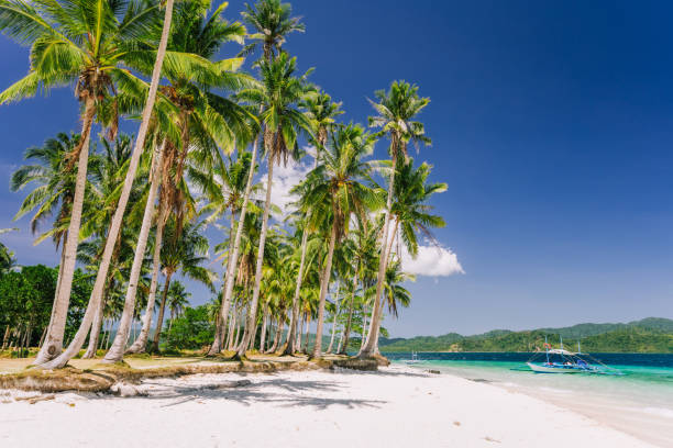 Vacation holiday feeling. Palawan most famous touristic spots. Palm trees and lonely island hopping tour boat on Ipil beach of tropical Pinagbuyutan, Philippines Vacation holiday feeling. Palawan most famous touristic spots. Palm trees and lonely island hopping tour boat on Ipil beach of tropical Pinagbuyutan, Philippines. pinagbuyutan island stock pictures, royalty-free photos & images