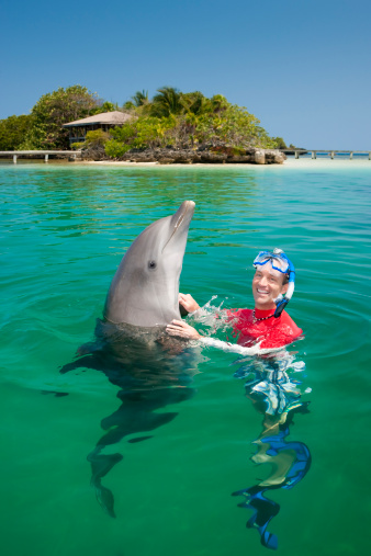 Vacation Lifestylesman Swimming With Dolphin Stock Photo