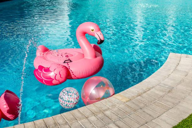 semester med flamingos - flotte bildbanksfoton och bilder