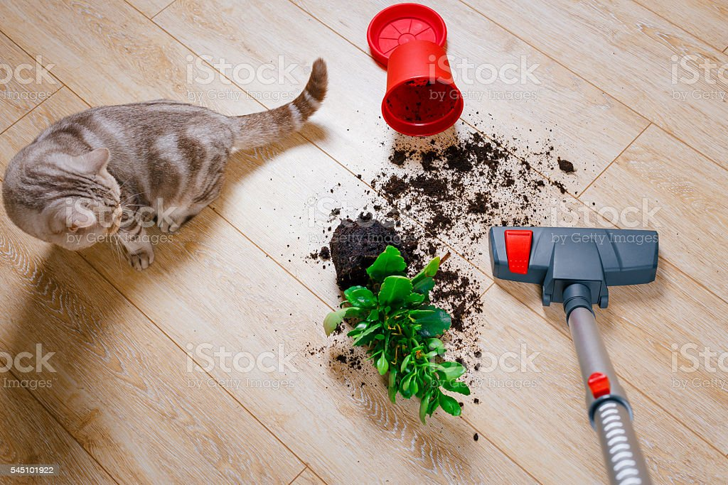 Vacuum cleaner, electric , wood, air , room , hand, pen, work , homework - Royalty-free Animal Stock Photo