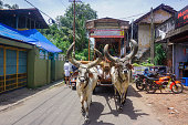 Kerala, India - August 2, 2017: Vaishnavas conduct messenger activities and travel around India with the help of bulls and carts. Every day they walk about 10 km, preach, sing songs and help people.
