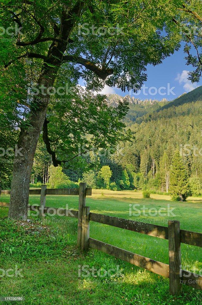 Val Canali (Dolomites - Italy) stock photo