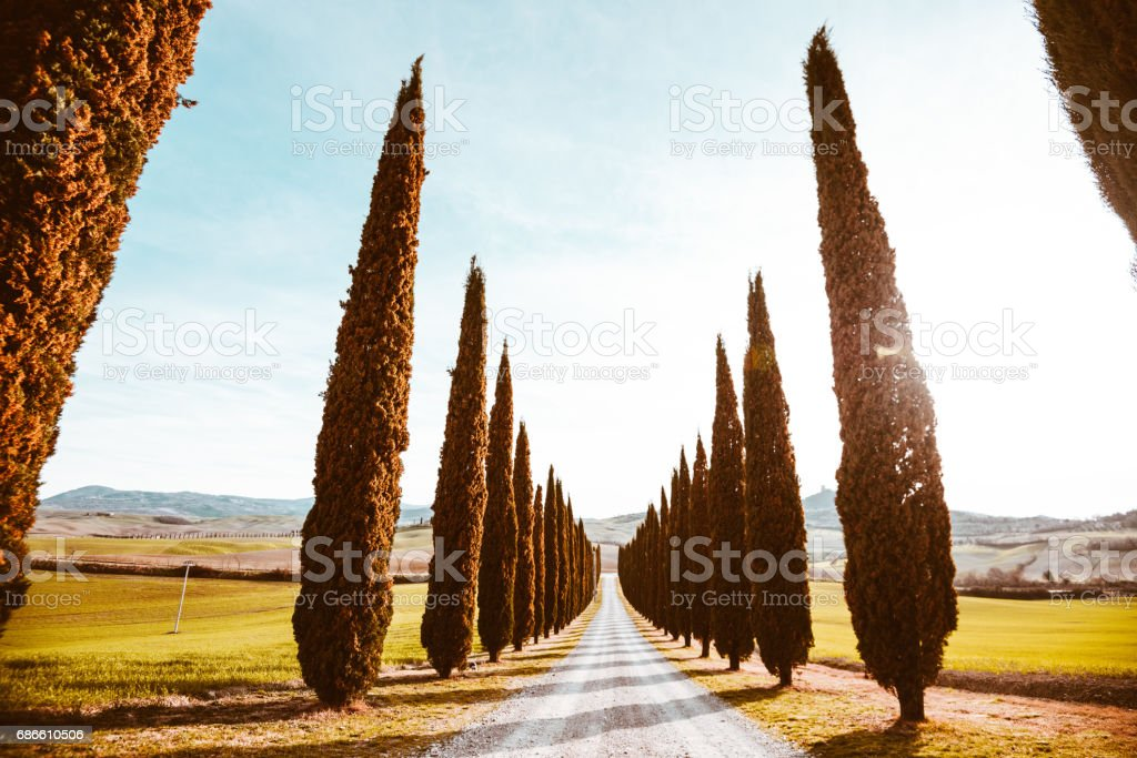 Val d'orcia country road with cypress royalty-free stock photo