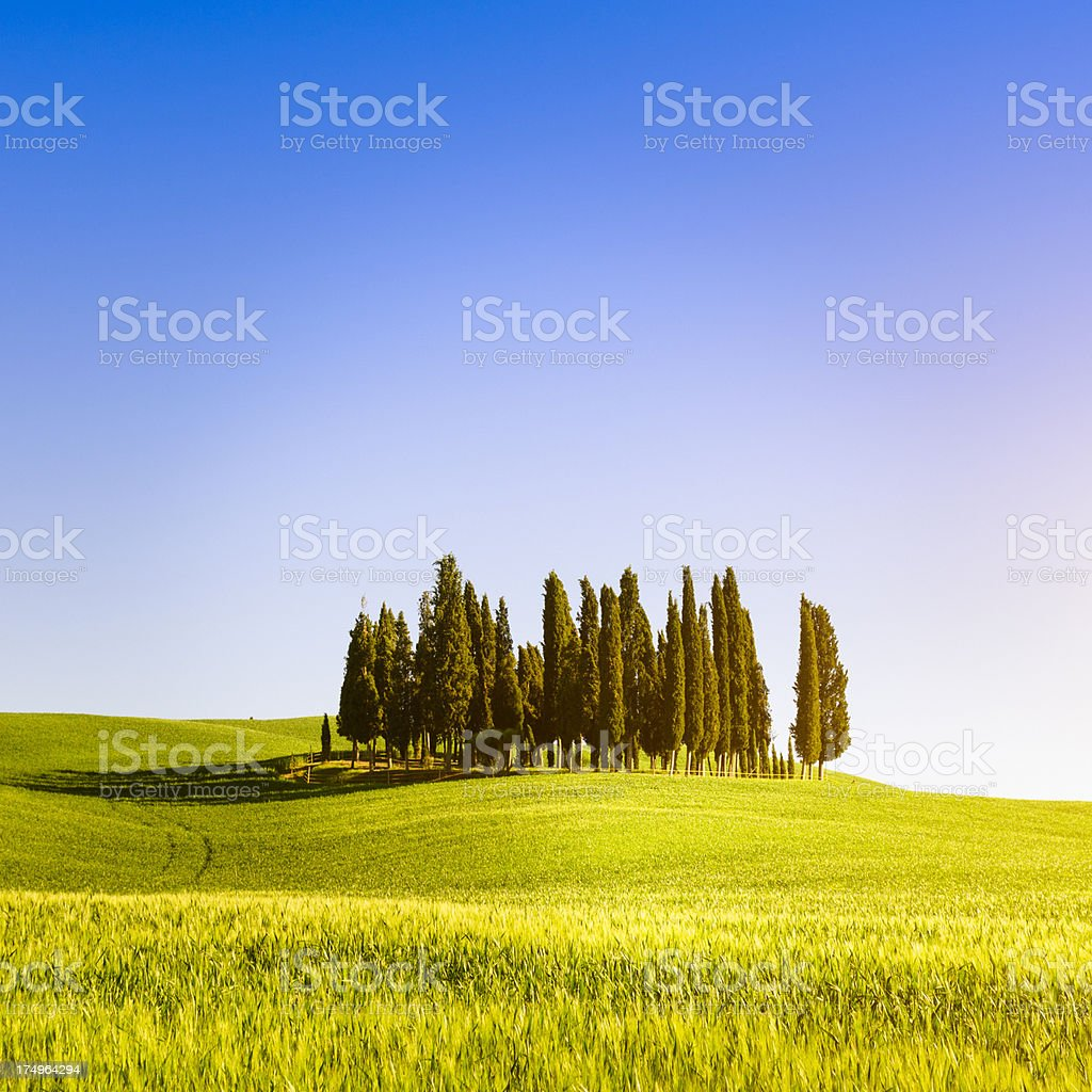 Val d'orcia cypress - beautiful italy royalty-free stock photo