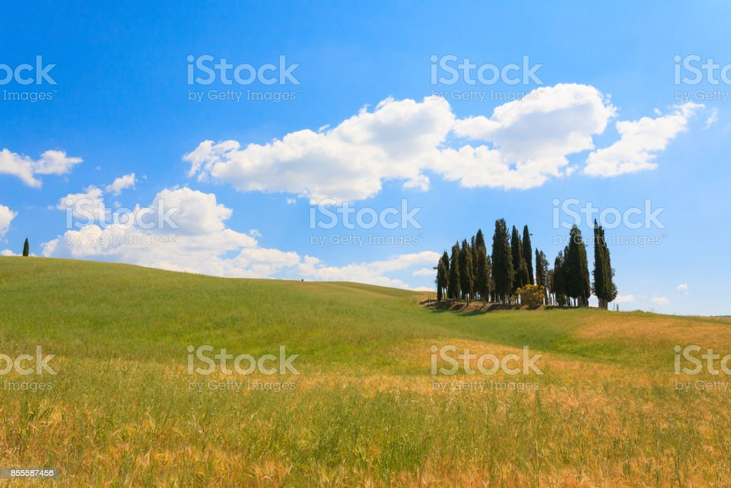 Val d'Orcia cypresses view stock photo