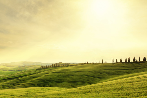 The hills of Val d'Orcia covered with green spring wheat (Tuscany, Italy) at sunset.