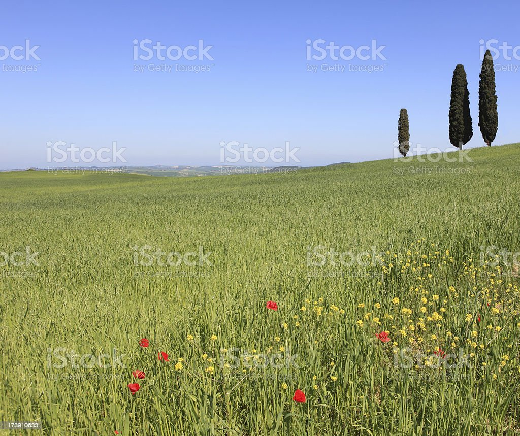 Val d'Orcia spring field and cypresses, Tuscany Italy royalty-free stock photo