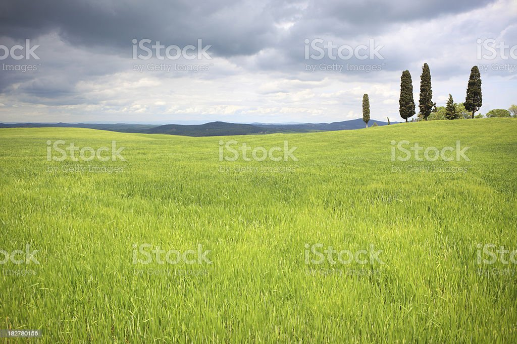 Val d'Orcia spring field and cypresses with moody sky, Tuscany royalty-free stock photo