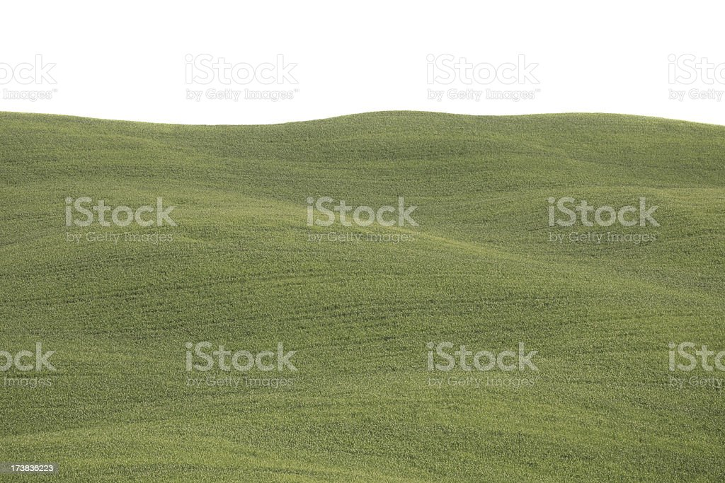 Val d'Orcia spring field isolated on white royalty-free stock photo