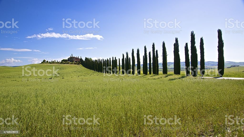 Val d'Orcia - Tuscany royalty-free stock photo
