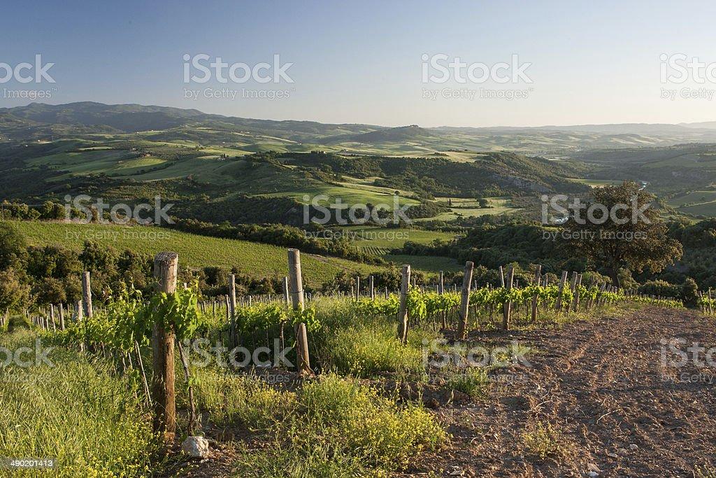 Val D'Orcia, Tuscany royalty-free stock photo