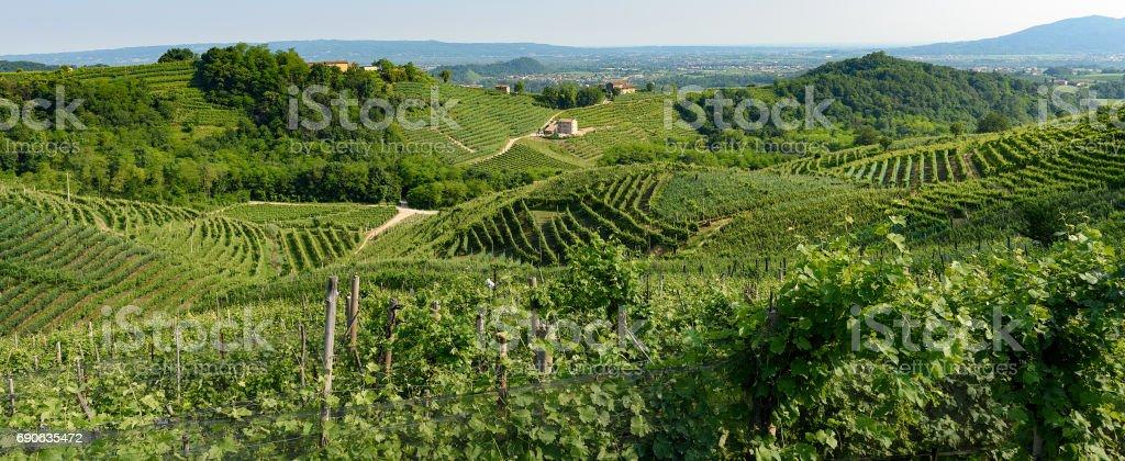 Valdobbiadene,land of Prosecco wine stock photo
