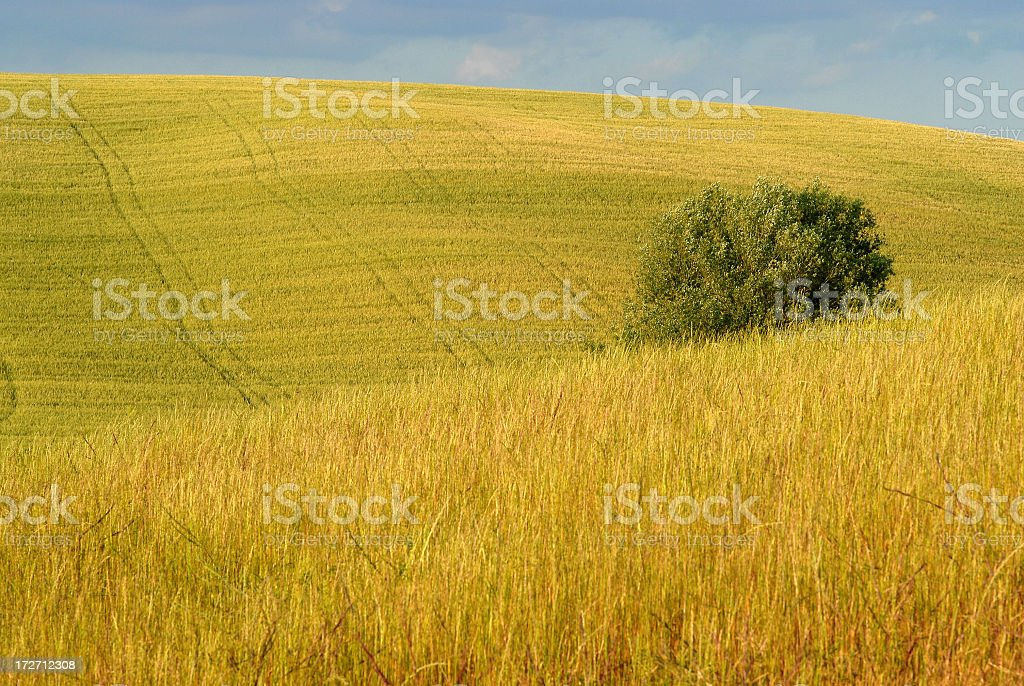 Valdorcia royalty-free stock photo