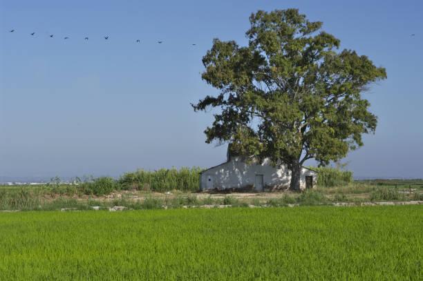 Casa de campo valenciana con arrozales - foto de stock