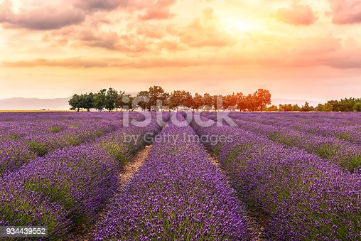 Valensole -lavender land, sunset,2