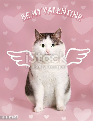 istock valentine card with fat smiling cat 849497902