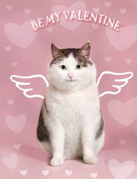 valentine card with fat smiling cat valentine post card with fat smiling cat  with angel wings and heart frame on the pink background kitten cute valentines day domestic cat stock pictures, royalty-free photos & images