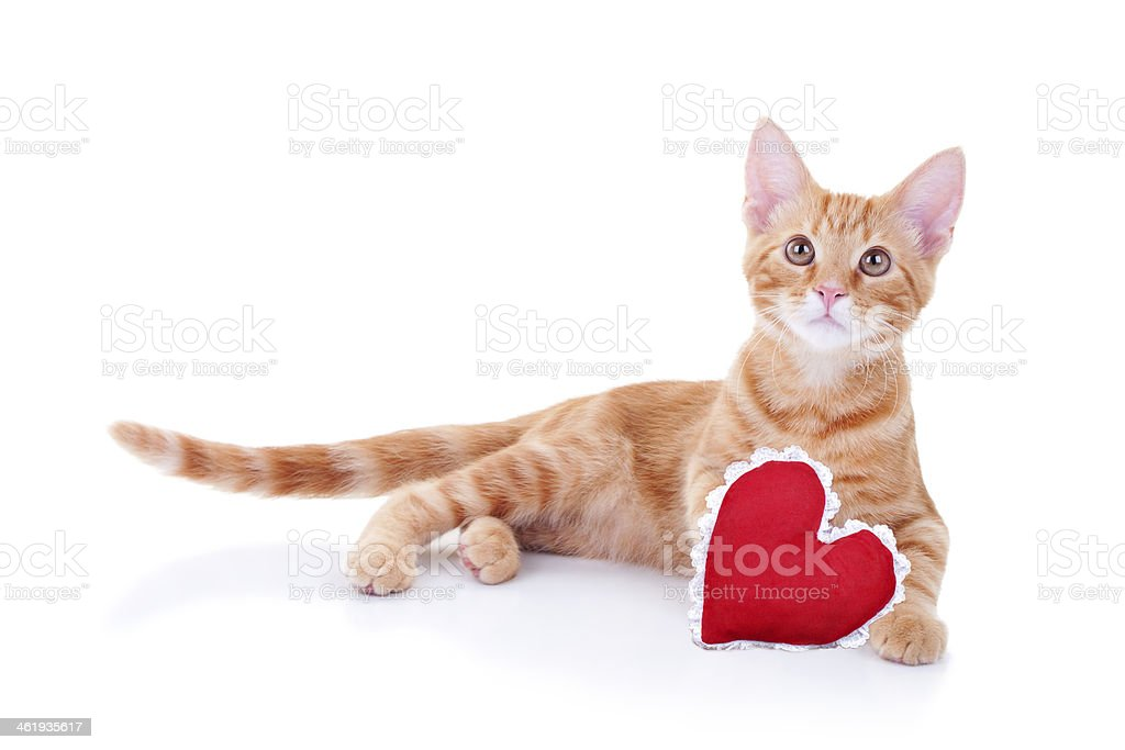 Valentine Cat stock photo