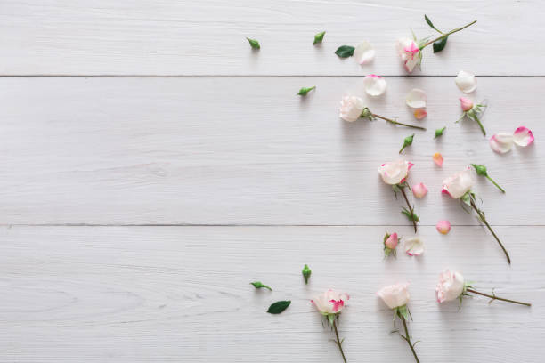 Valentine day background petals and flowers on white wood picture id639464214?b=1&k=6&m=639464214&s=612x612&w=0&h=9ep sayd8dyuizxb0yuyfkx280m q2s2odlredhmtj4=