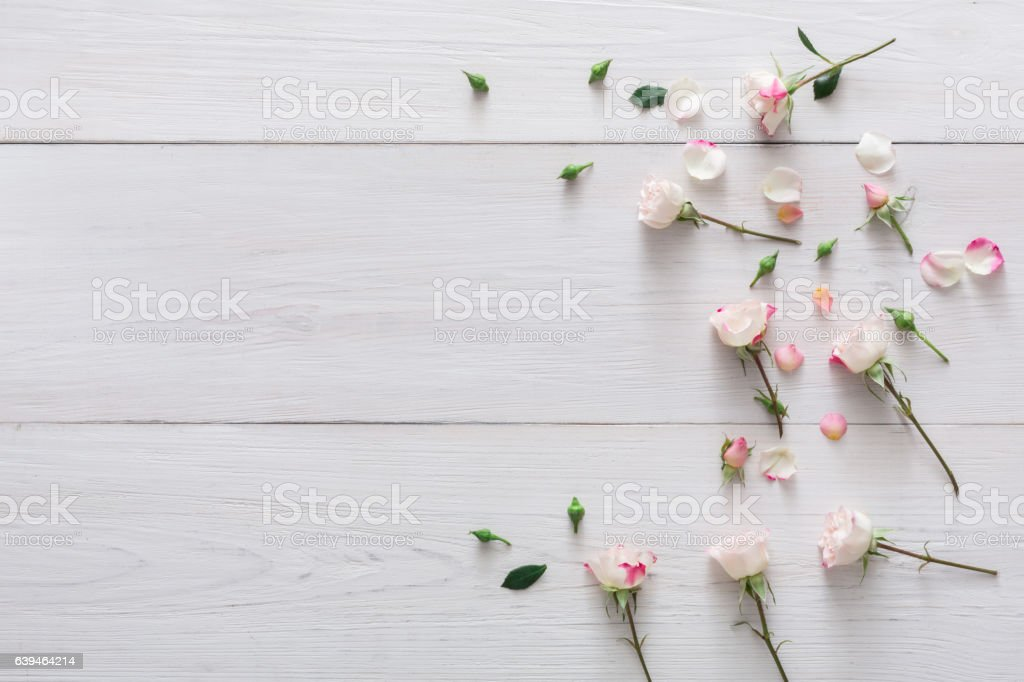 Valentine day background, petals and flowers on white wood stock photo