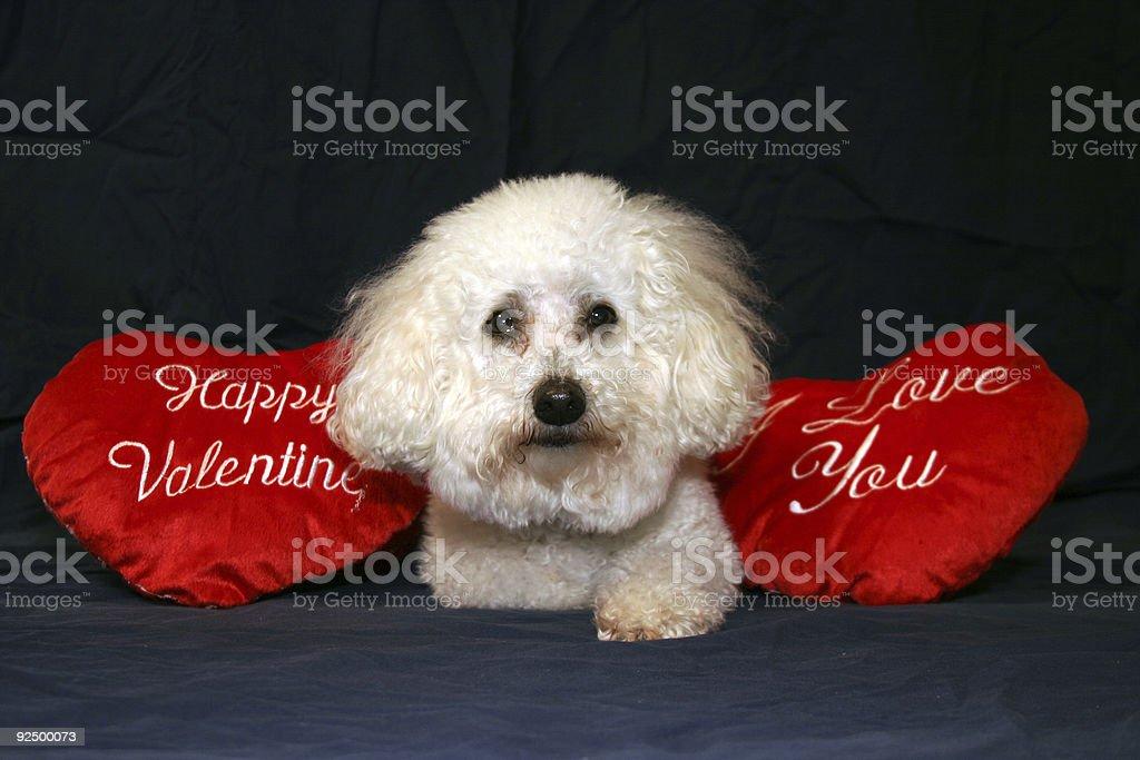 Valentine Dogs 5 royalty-free stock photo