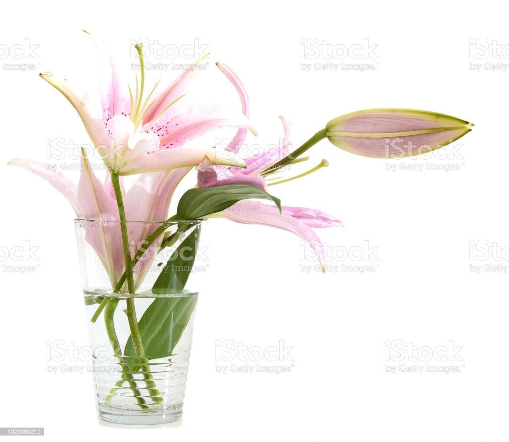 flores do dia dos namorados em branco vaso isolado - foto de acervo