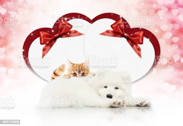 Valentine gift card or pets store signboard with cat and dog together picture id893423868?b=1&k=6&m=893423868&s=612x612&h= fcyxam5xesf7gkpui6ko auwsrtsj 0z2oxesxkxu8=