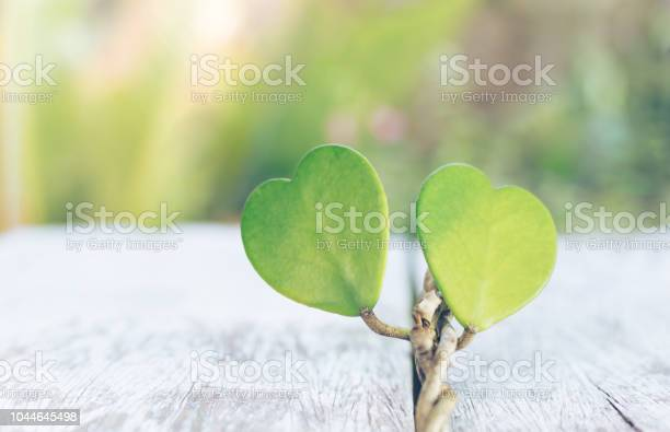 Valentine heart green leaf on wooden background valentines day copy picture id1044645498?b=1&k=6&m=1044645498&s=612x612&h= 05hrx56xluhqj6wsi50evopuewdaoad wp1myg jgy=
