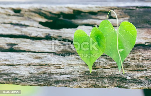 Valentine heart green leaf on wooden background. Valentine's day concept Holiday. copy space.