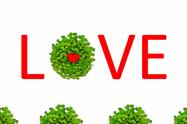 Valentine love symbol surrounded by green lily with love text stock photo