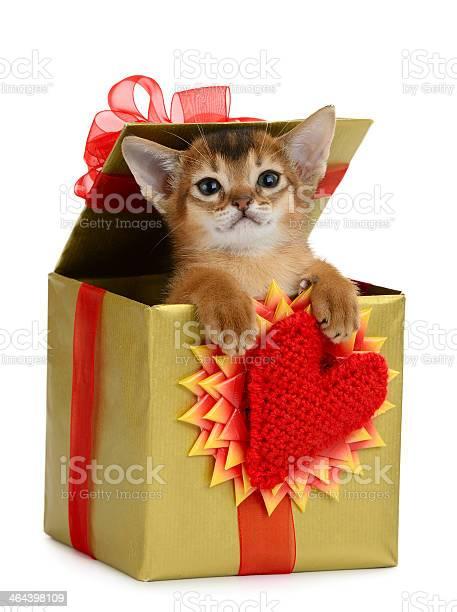 Valentine theme kitten in a present box picture id464398109?b=1&k=6&m=464398109&s=612x612&h=smtkhzdcwze3vvyd2 a3h1httv dfpmncj7xm3twp20=