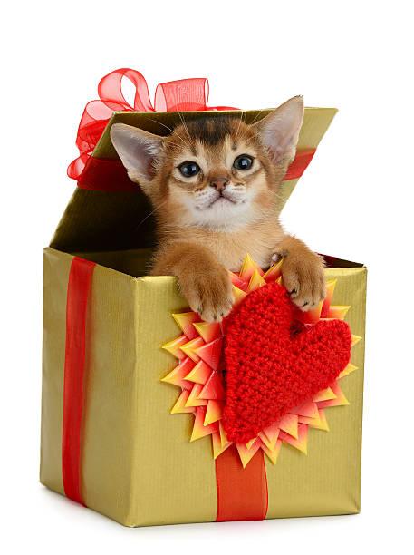 Valentine theme kitten in a present box picture id464398109?b=1&k=6&m=464398109&s=612x612&w=0&h=m6kfug11wjdvprbygz37cqekmy79e6ea7qxdrqir7lm=
