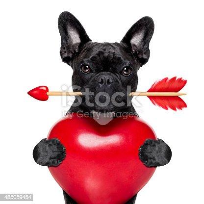 638484874 istock photo valentines arrow dog 485059454