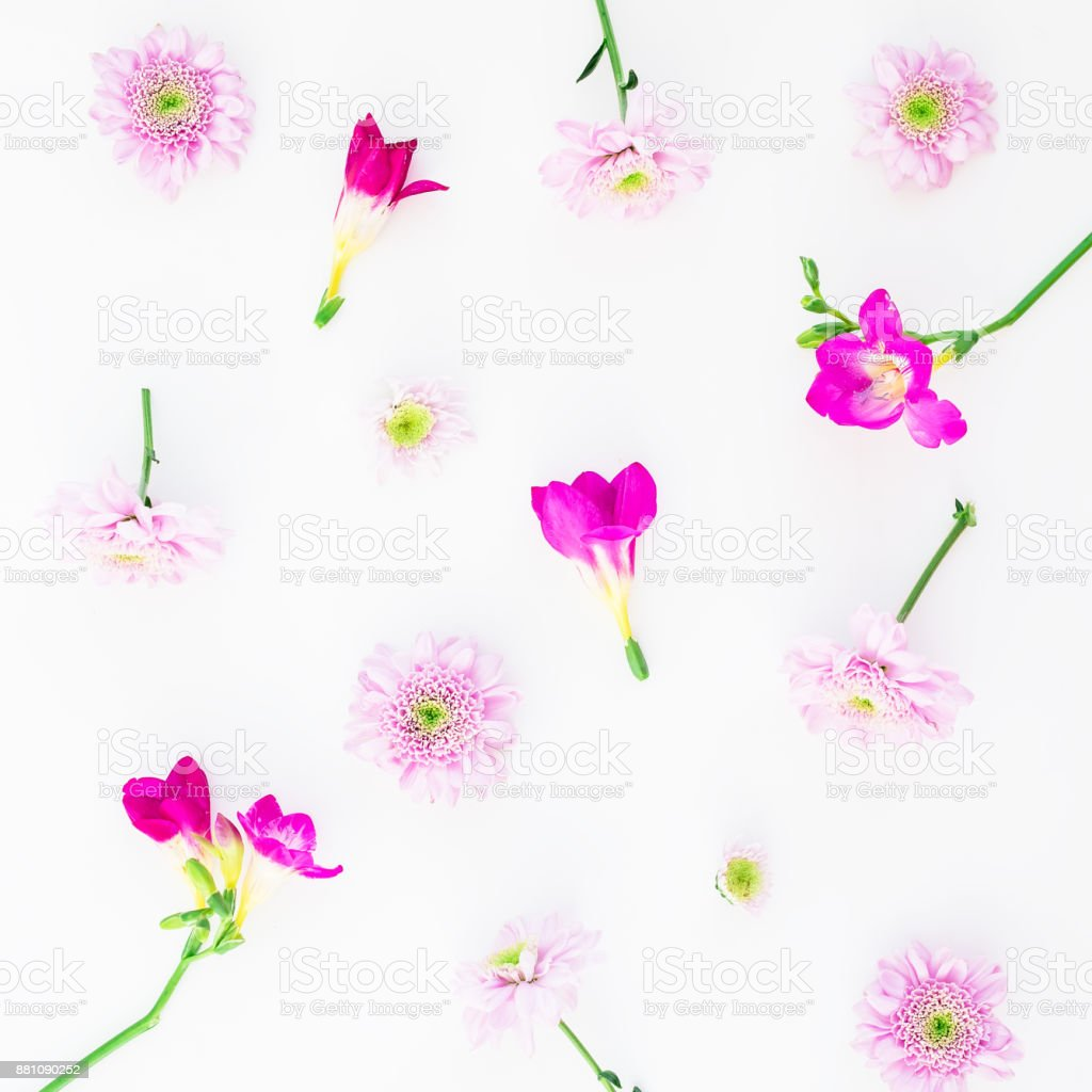 Valentine's background. Floral pattern of pink flowers isolated on white background, Flat lay, Top view stock photo