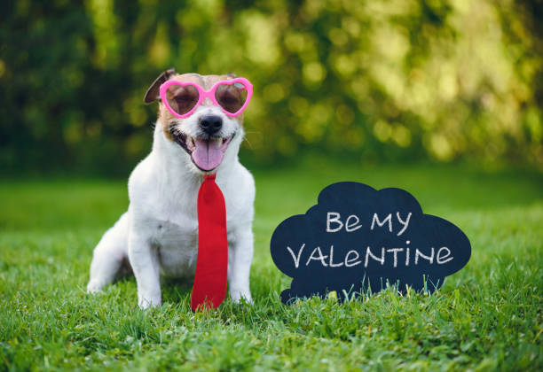 "Valentines card greeting with dog wearing tie and glasses next to inscription on blackboard  ""Be my valentine"" Valentine's day concept with dog and blackboard animal valentine stock pictures, royalty-free photos & images"