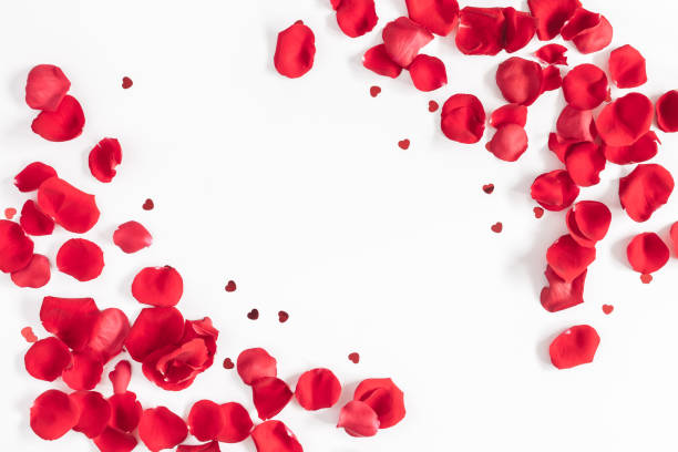 valentines day background. flat lay, top view, copy space - pétala imagens e fotografias de stock