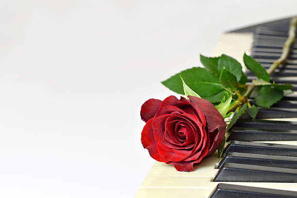 Valentines day card red rose on piano keys picture id637511242?b=1&k=6&m=637511242&s=612x612&w=0&h=deqkym9qvbc8vn3dcxht5ioto0ce8nq2ptdkc1vauz8=