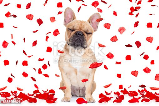 istock valentines day dog crazy in love 638806604