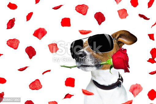 istock valentines day dog rose in mouth 638807350