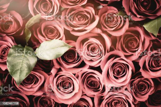 Valentines day faded vintage red roses background picture id1082467708?b=1&k=6&m=1082467708&s=612x612&h=ocrxfkmifigkpkt1mgvcm frt ka38xpn70ynlio1uq=