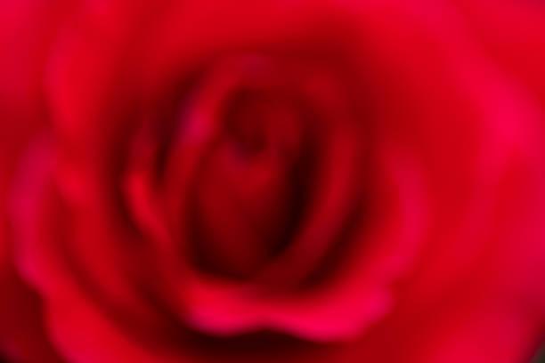 Valentines day picture id1203176118?b=1&k=6&m=1203176118&s=612x612&w=0&h=vjy0lm bbdyl dsjsxkl2ionn5pumzcu2azzoxzw4o4=