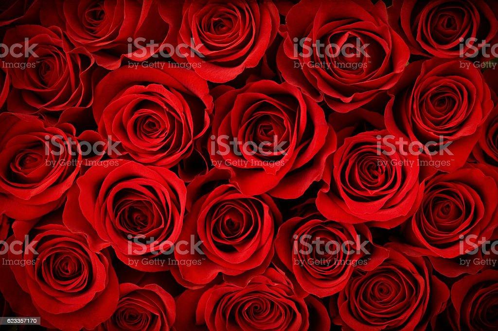 Valentine's Day Red Rose Background