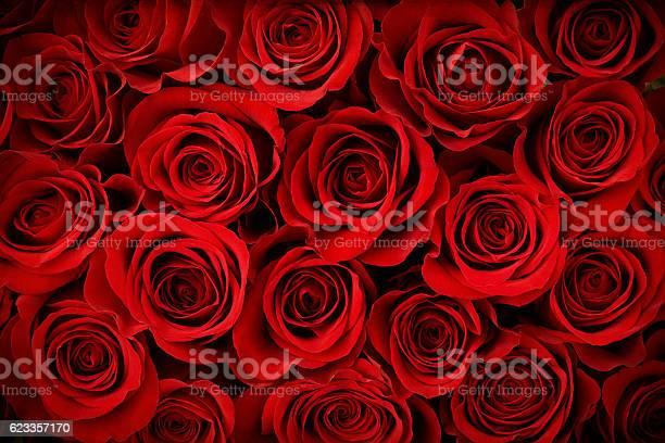Valentines day red rose background picture id623357170?b=1&k=6&m=623357170&s=612x612&h=3joco9atrohjsknvfn0 9ojdl4ofo9k73nbzskklt8q=